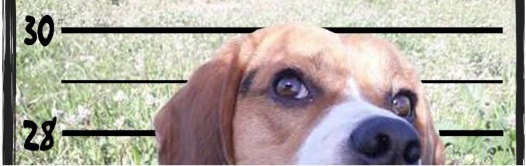 Beagle culpable Wifi