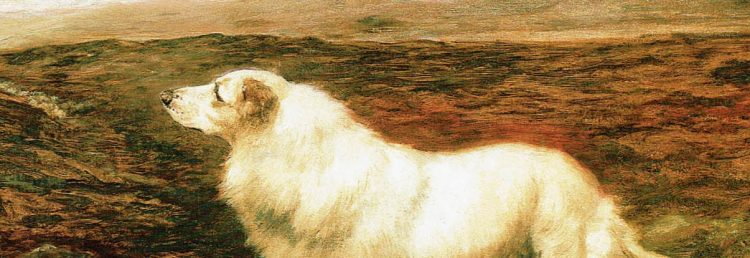 dog collie white