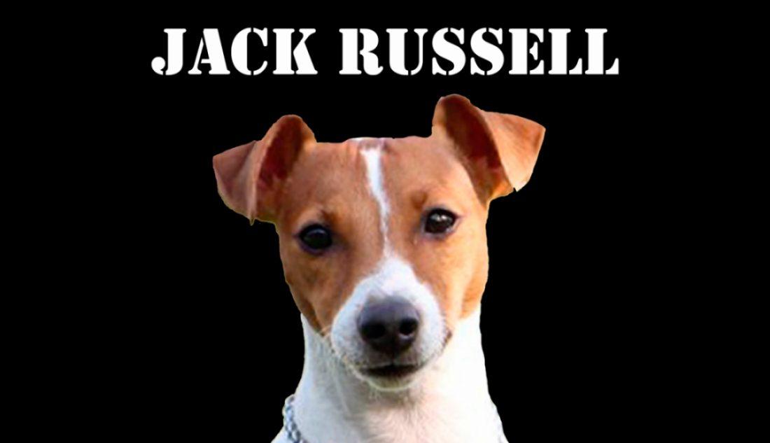 jack-russell-cabecera