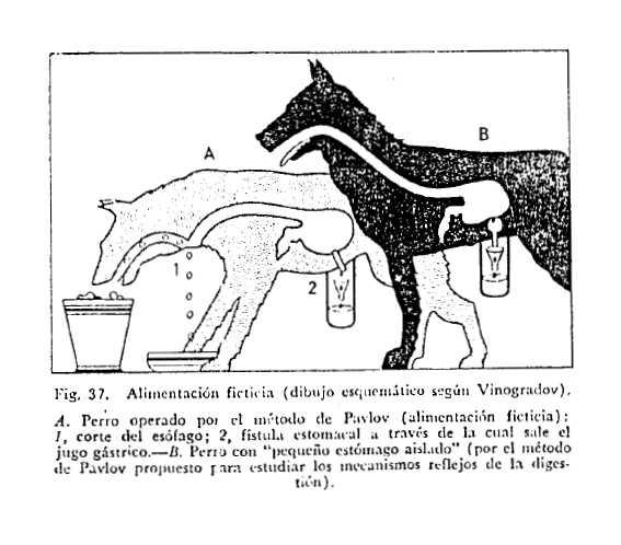 esquema experimento pavlov